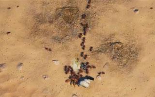 【小熙解说】模拟地下蚁国 沙滩最终决战! 木蚁军团遭遇超快大